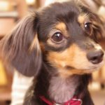 犬カフェ・ドッグカフェで癒される 猫ブームの後に犬ブームが来る!